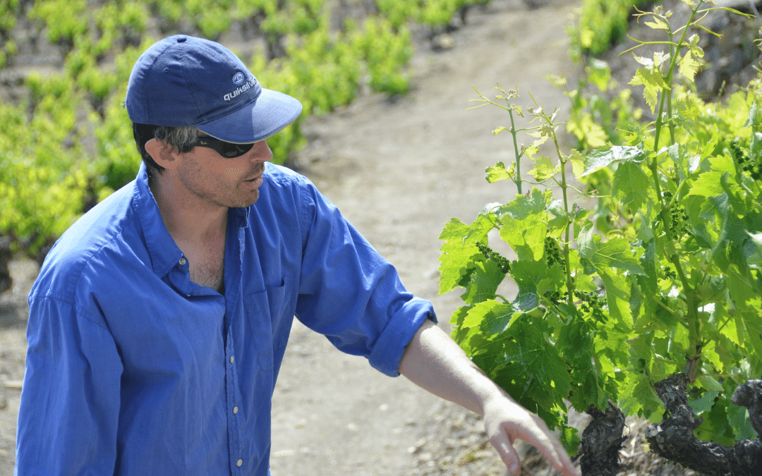 Winemaking course with Justin Howard-Sneyd MW plus writing competition