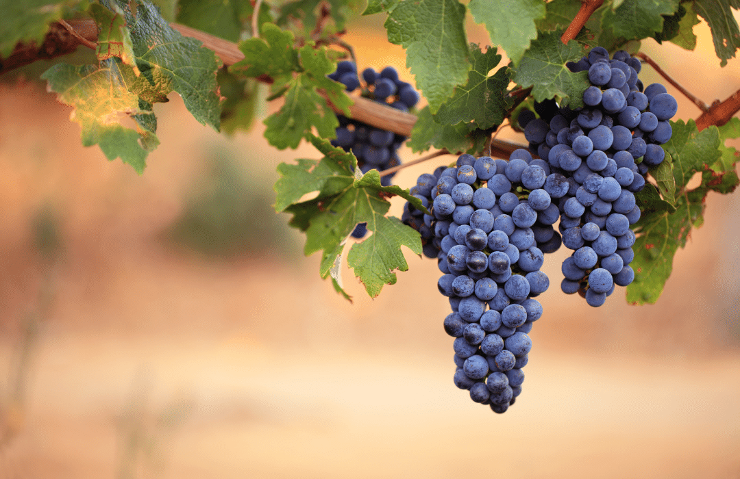 2021 MW exam questions and wines revealed